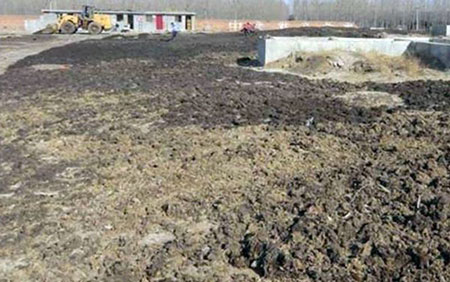 chicken manure in the outer ground