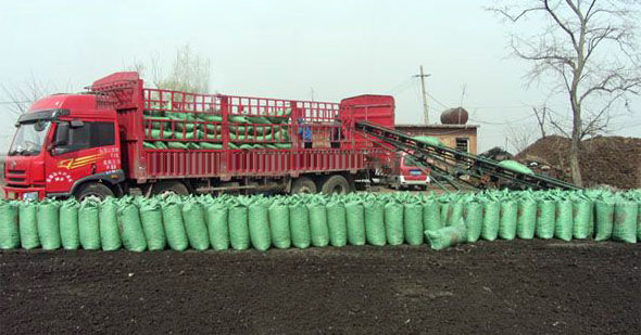 packed chicken manure is loading to a truck by belt conveyor